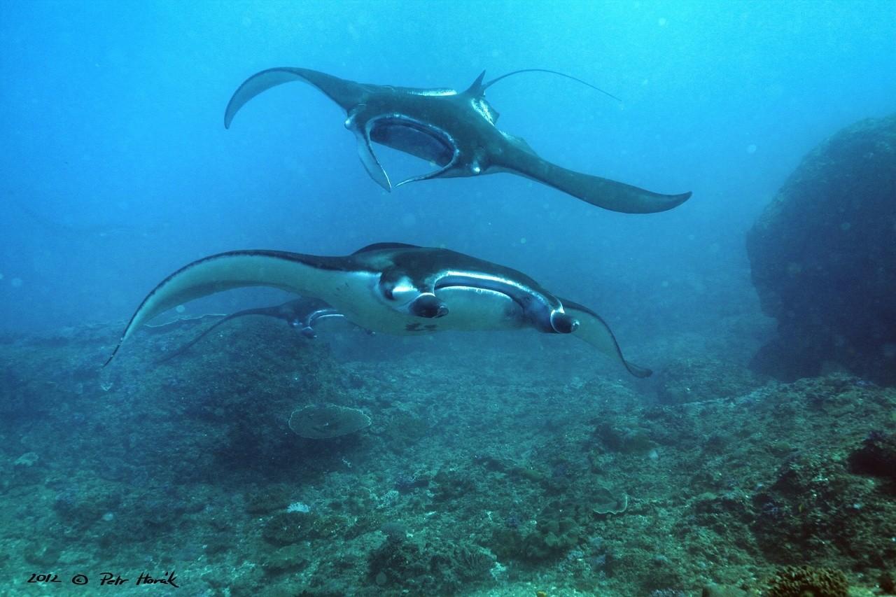 OK Divers Bali - potápění na Bali