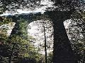 Kocourský viadukt